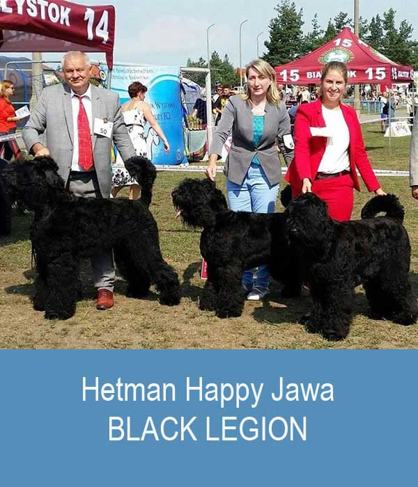 Hetman, Happy, Jawa (BLACK LEGION kennel)