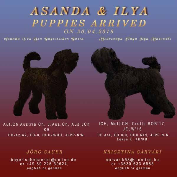 Assandra-&Ilya-popup20190423-600x600w